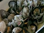 recipe easy steamed clams